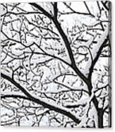 Snowy Branch Canvas Print