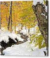 Snowy Brook Canvas Print