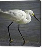 Snowy Egret By The Lagoon Canvas Print