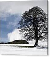 Snowy Field And Tree Canvas Print