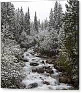 Snowy Foliage Along Stream In Autumn Canvas Print