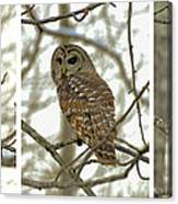 Snowy Morning Owl Triptic - 10dec563a Canvas Print