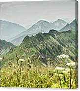 Snowy Mountains And Grassy Fields Canvas Print