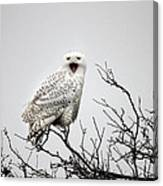 Snowy Owl In A Tree Canvas Print