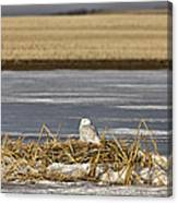 Snowy Owl Perched Frozenpond Canvas Print