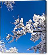 Snowy Trees And Blue Sky Canvas Print