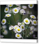 So Many Flowers So Little Time Canvas Print