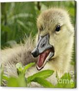So Much To Say So Little Time For A Gosling Canvas Print