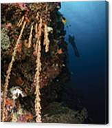 Soft Coral Reef, Indonesia Canvas Print