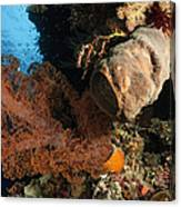 Soft Coral Seascape, Indonesia Canvas Print