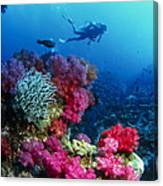 Soft Corals Canvas Print