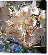 Soft Flowers Canvas Print