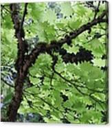 Soft Green Leaves Canvas Print