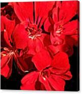Soft Petals Cascade Canvas Print