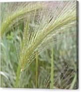Soft Rain On Grass Canvas Print