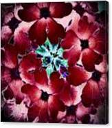 Soft Scarlet Floral Canvas Print