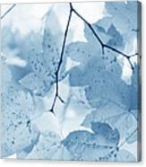 Softness Of Blue Leaves Canvas Print