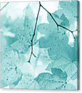Softness Of Teal Maple Leaves Canvas Print