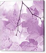 Softness Of Violet Maple Leaves Canvas Print