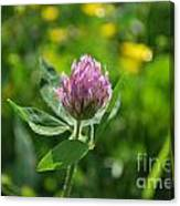 Solitarty Clover Canvas Print