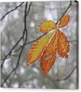 Solitary Leaf Canvas Print