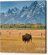 Solitary Moments Canvas Print