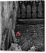Solitary Rose Canvas Print