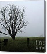 Solitude In Queensland Canvas Print