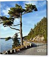Somes Sound Maine Canvas Print
