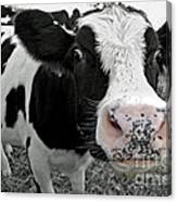 Something Kinda Moo Canvas Print