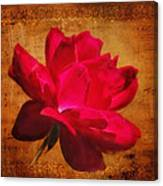 Song Of The Last Rose Canvas Print