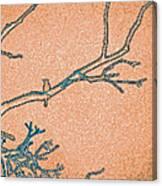 Songbird Peach Canvas Print