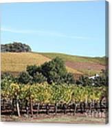 Sonoma Vineyards - Sonoma California - 5d19307 Canvas Print