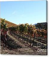 Sonoma Vineyards - Sonoma California - 5d19311 Canvas Print