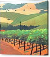 Sonoma Vinyard Canvas Print