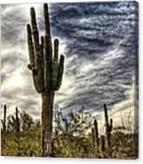 Sonoran Desert Iv Canvas Print