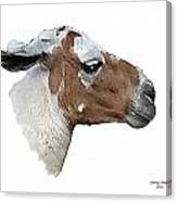 South American Goat Canvas Print