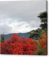 Southern California Fall Canvas Print