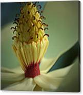 Southern Magnolia Flower Canvas Print