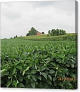 Soy Beans And Red Barn Canvas Print