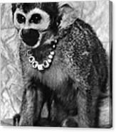 Space Monkey: Baker, 1979 Canvas Print