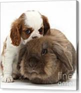 Spaniel Puppy And Rabbit Canvas Print