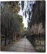 Spanish Moss Sidewalk Canvas Print
