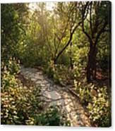 Sparkling Dawn On A Woodland Path Canvas Print