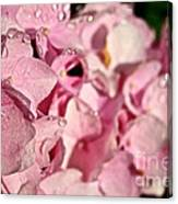 Sparkling Spring Canvas Print