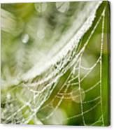 Sparkling Web Canvas Print