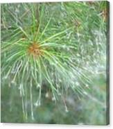 Sparkly Pine Canvas Print