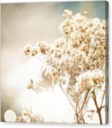 Sparkly Weeds Canvas Print