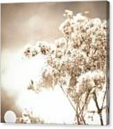 Sparkly Weeds In Sepia Canvas Print