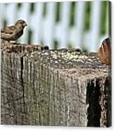 Sparrow And Chipmunk Coexist Canvas Print
